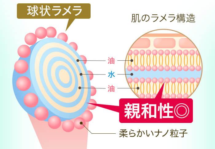 球状ラメラと肌のラメラ構造との親和性