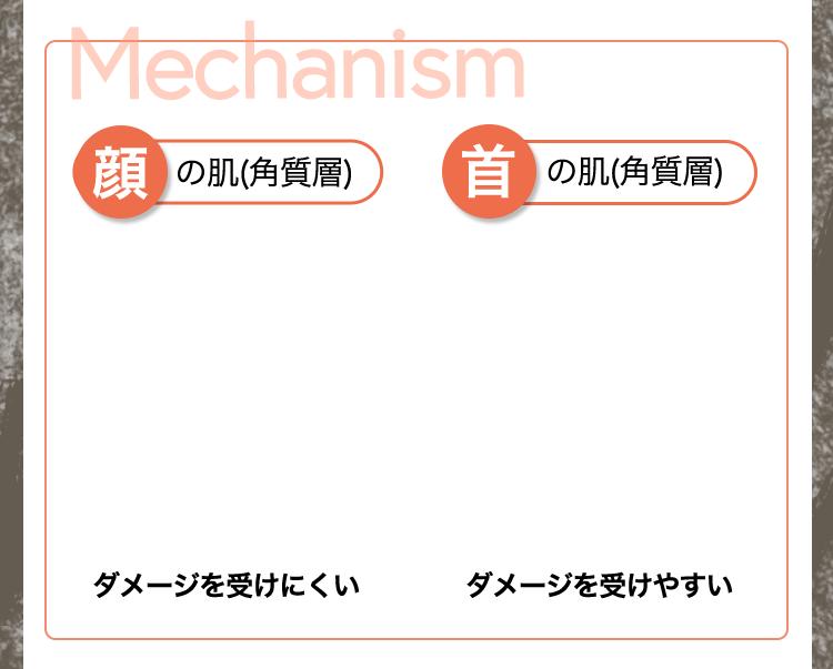 メカニズム