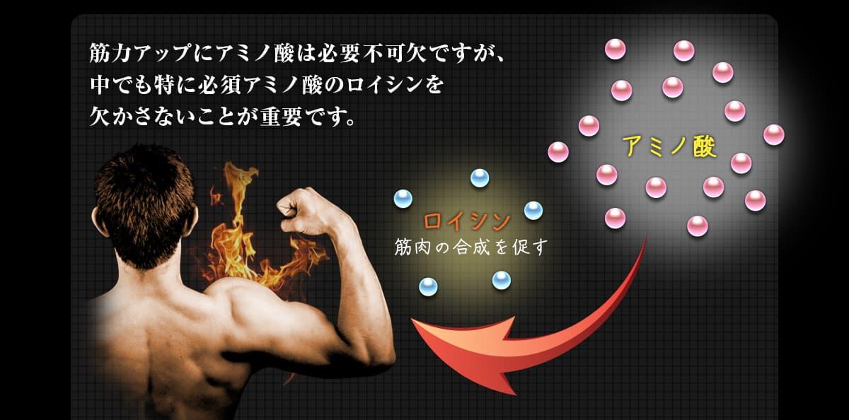 筋力アップにアミノ酸は必要不可欠ですが、中でも特に必須アミノ酸のロイシンを欠かさないことが重要です。