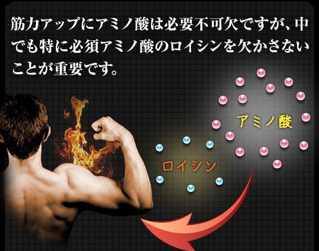 筋力アップにアミノ酸は必要不可欠