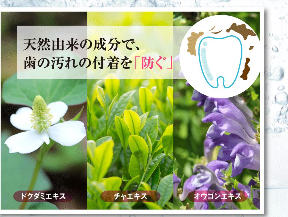 天然由来の成分で歯の汚れの付着を「防ぐ」ドクダミエキス、チャエキス、オウゴンエキス