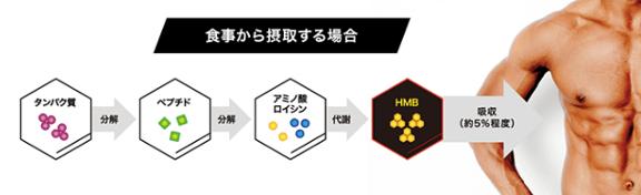 HMBが吸収されるまでのフロー図