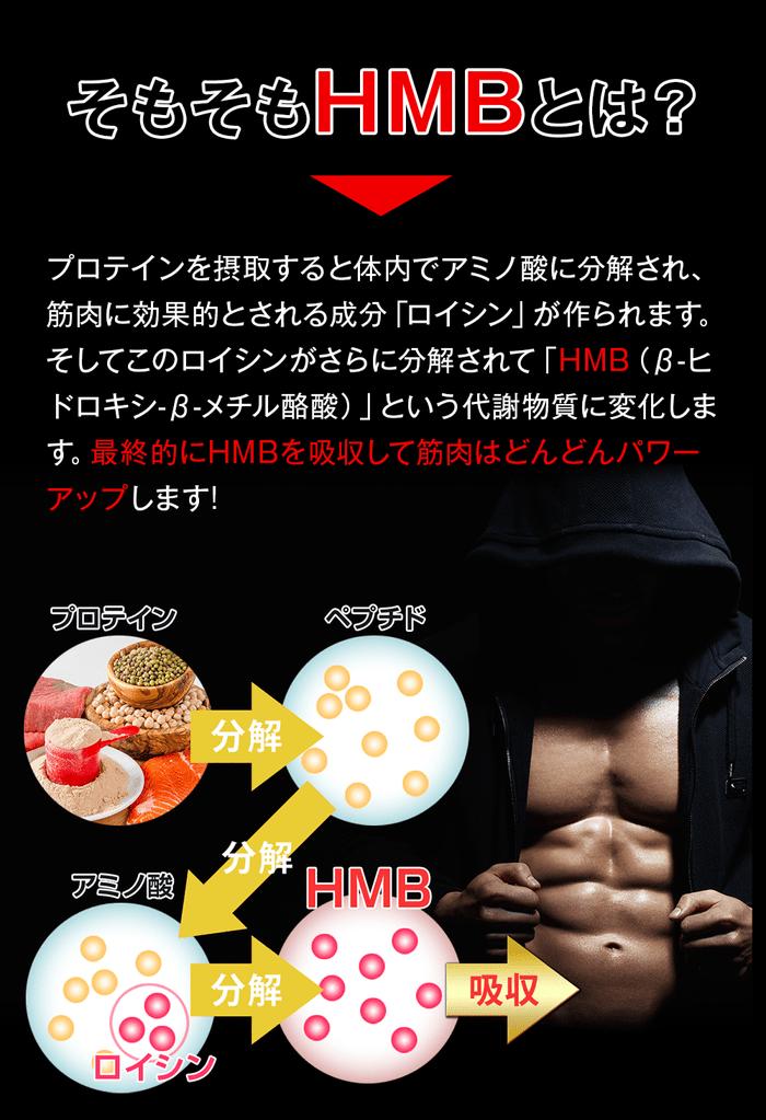そもそもhmbとはプロスポーツ選手も愛用する高効率な筋トレサポート成分。摂取したプロテインは体内でアミノ酸に分解され、筋肉効果的とされる成分ロイシンが作られます。このロイシンが更に分解されてhmbという代謝物質に変化します。最終的にhmbを吸収して筋肉はどんどんパワーアップします!