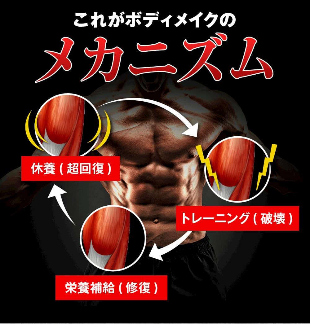 これがボディメイクのメカニズム!トレーニングで筋繊維を破壊、栄養補給により修復、休養で増大を繰り返し美しい体を作ることが出来ます。それに欠かせないのが鍛神hmbサプリメント2000mgです!