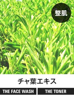 【整肌】チャ葉エキス[THE FACE WASH] [THE TONER]