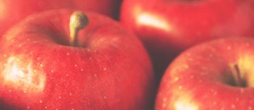 林檎果実培養細胞エキス