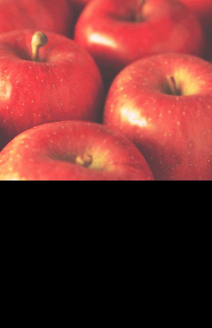 リンゴ果実培養細胞エキス(保湿、整肌)収穫後4ヶ月経っても潤いを保ち腐らない、話題のリンゴ「ウトビラースパトラウバー」の幹細胞エキス。