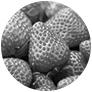 イチゴ種子エキス(保湿)