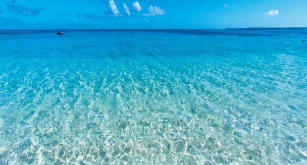 トンガ王国の美しい海で育まれたモズクの画像