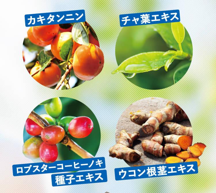 カキタンニン チャ葉エキス ロブスターコーヒーノキ種子エキス ウコン根茎エキス