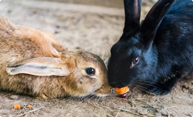 動物実験を行わない