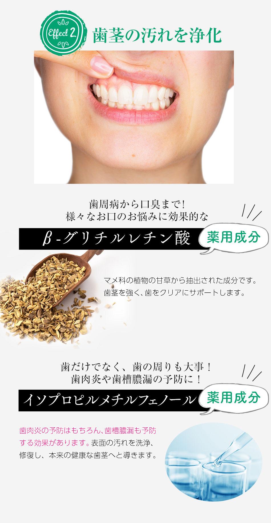 ②歯茎の汚れを浄化!薬用成分B−グリチルレチン酸、薬用成分イソプロピルメチルフェノール