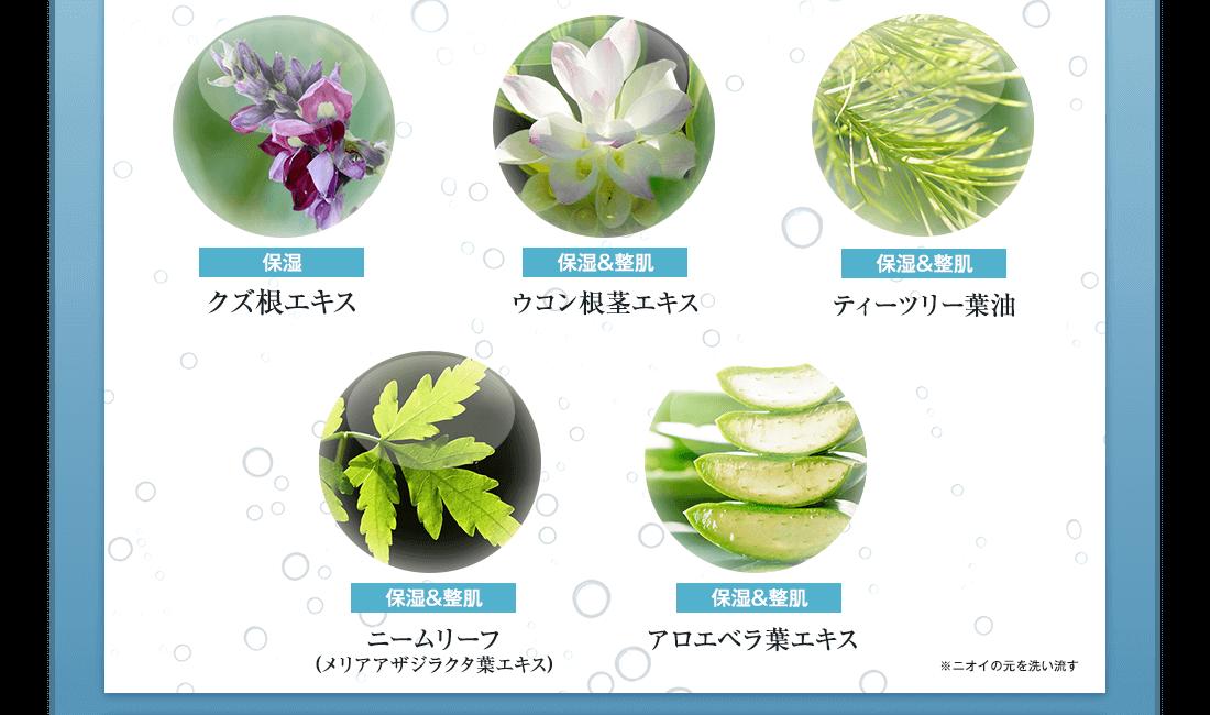和漢植物エキス一覧