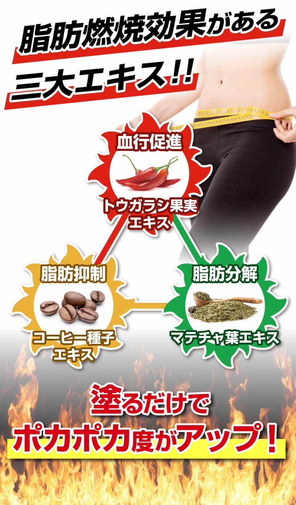 脂肪燃焼効果がある三大エキス