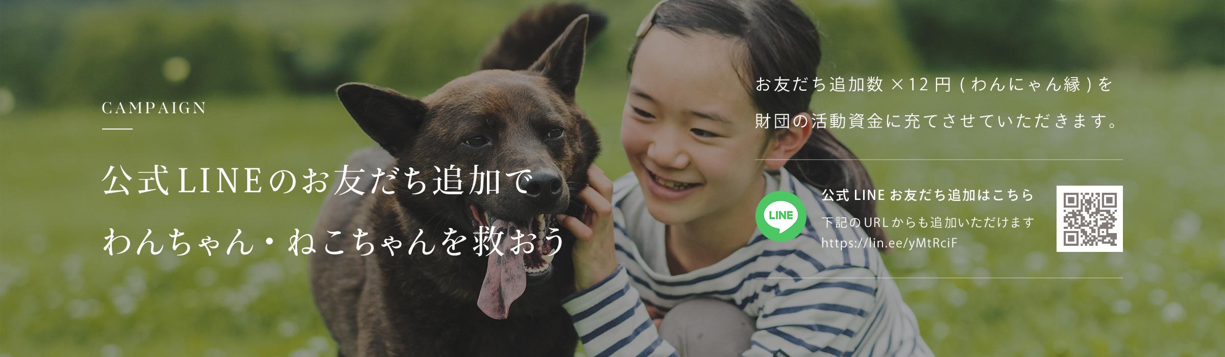 公式LINEのお友達追加でわんちゃん・ねこちゃんを救おう お友達追加数×12円(わんにゃん緑)を財団の活動資金に充てさせていただきます。犬猫生活公式LINE お友達追加はこちら