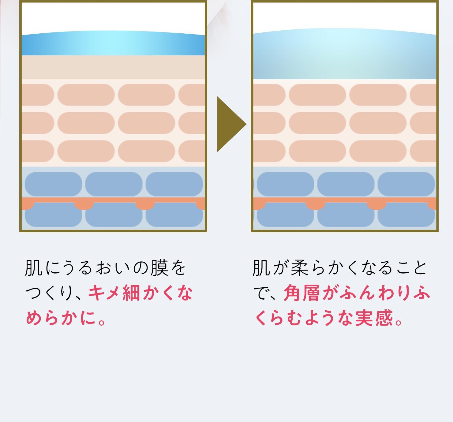 肌にうるおいの膜をつくり、キメ細かくなめらかに。肌が柔らかくなることで、角層がふんわりふくらむような実感。