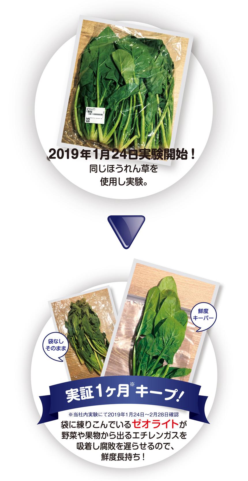2019年1月24日実験開始!同じほうれん草を使用し実験。実証1ヶ月※キープ!※当社内実験にて2019年1月24日?2月28日確認  袋に練りこんでいる「ゼオライト」が野菜や果物から出るエチレンガスを吸着し腐敗を遅らせるので、鮮度長持ち!