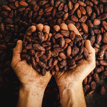 LA・LA・SEEK Dardenne(ダーデン) チョコレート イメージ
