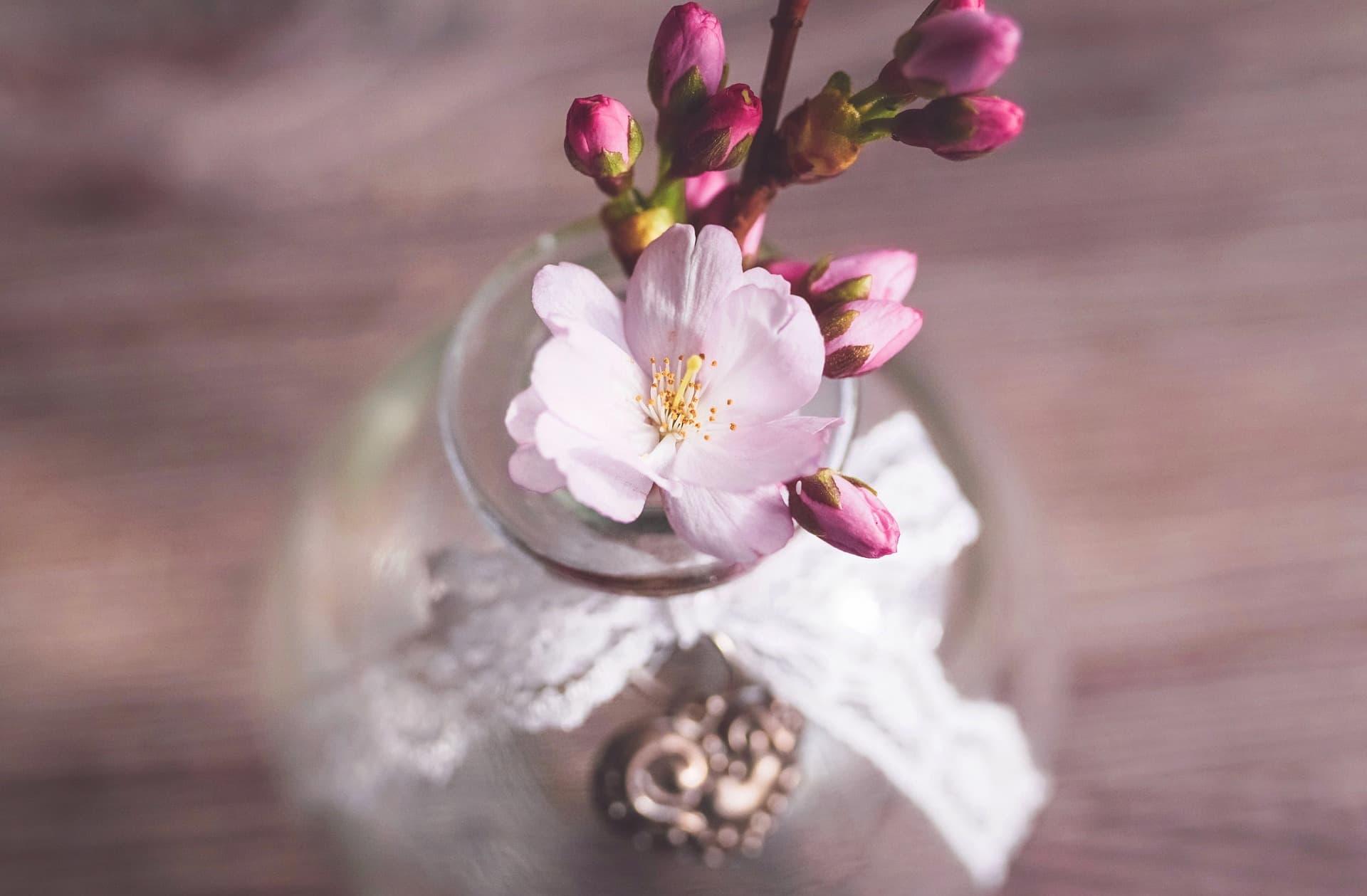 満開の桜香水サクラマグナ_ジャーナル_V07
