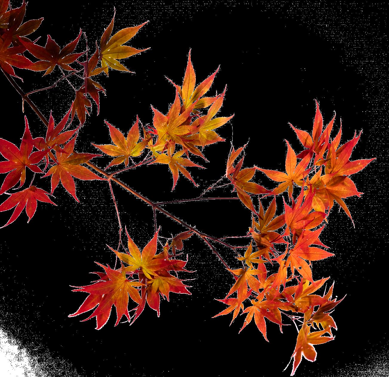 秋の香水フラクタス-フレーム