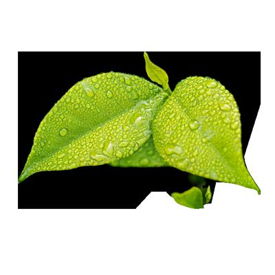 leafy_green