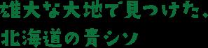 雄大な大地で見つけた、北海道の青シソ