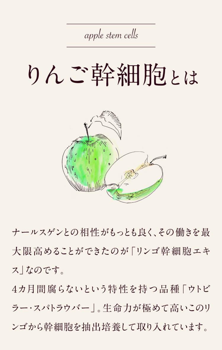りんご幹細胞とは