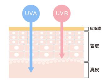 紫外線の肌への影響