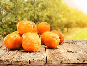オレンジの写真
