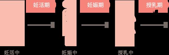 妊活期→妊娠期→授乳期
