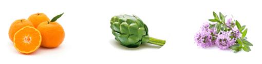 10-4_植物エキス