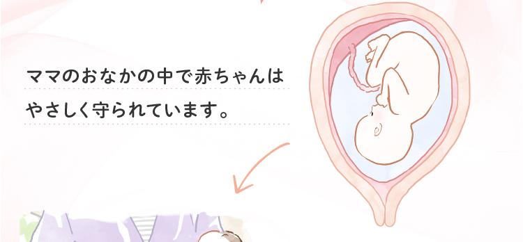 ママのおなかの中で赤ちゃんはやさしく守られています。