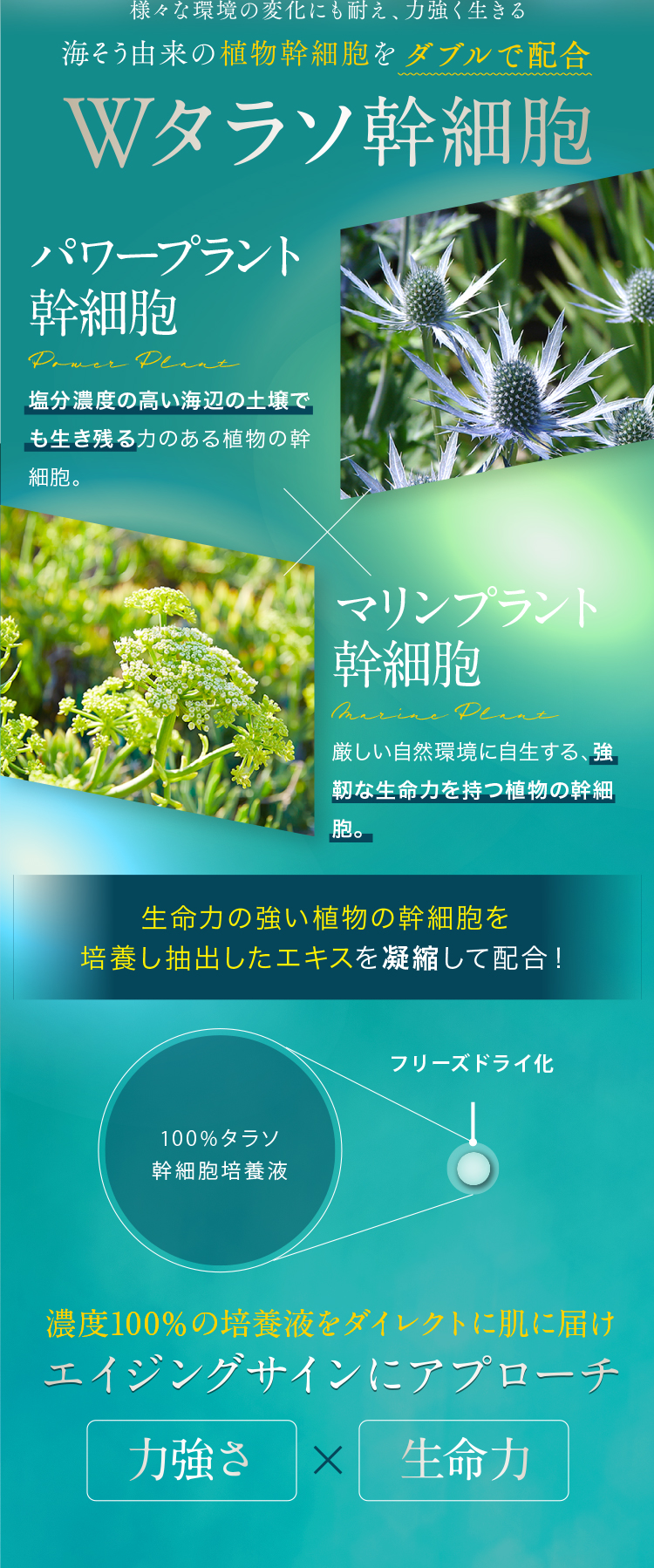 「植物幹細胞」とは