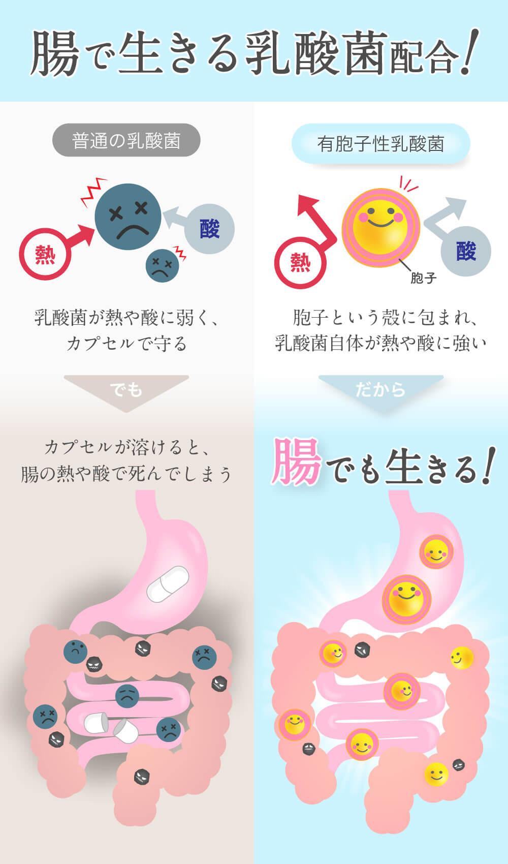 腸で生きる乳酸菌配合!
