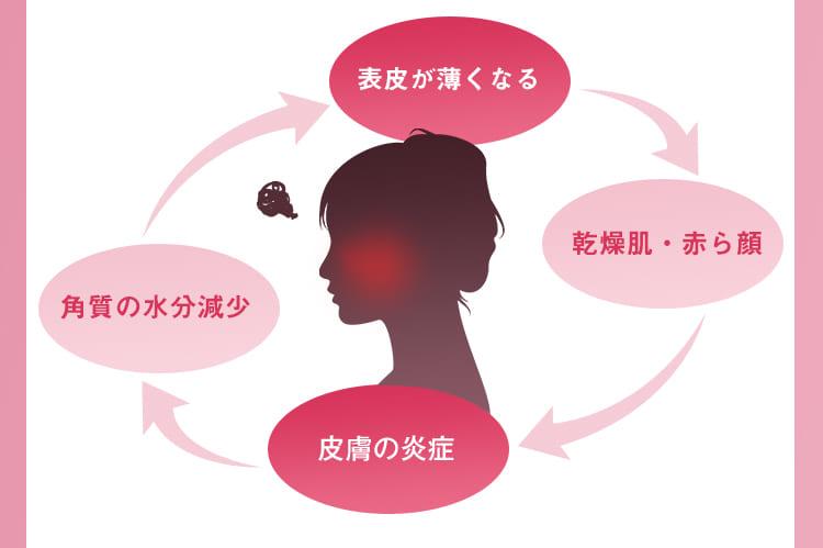 バリア機能の低下→乾燥肌・赤ら顔→皮膚の炎症→角質の水分減少
