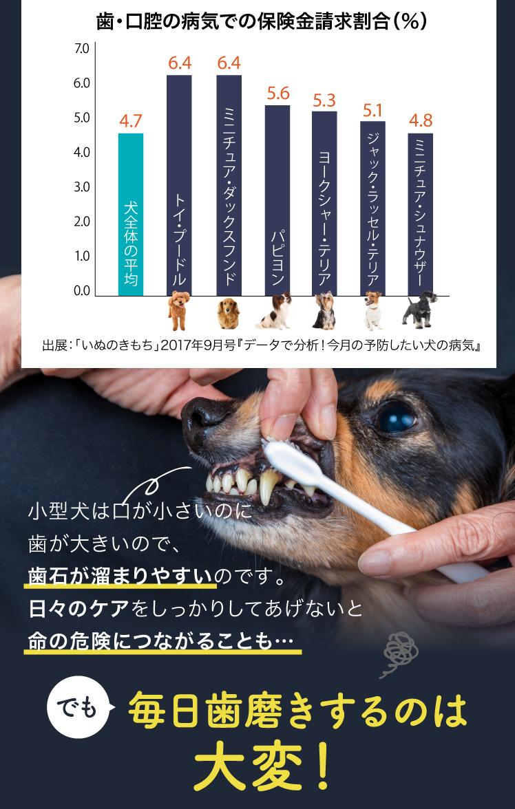 歯・口腔の病気になりやすい犬種は小型犬
