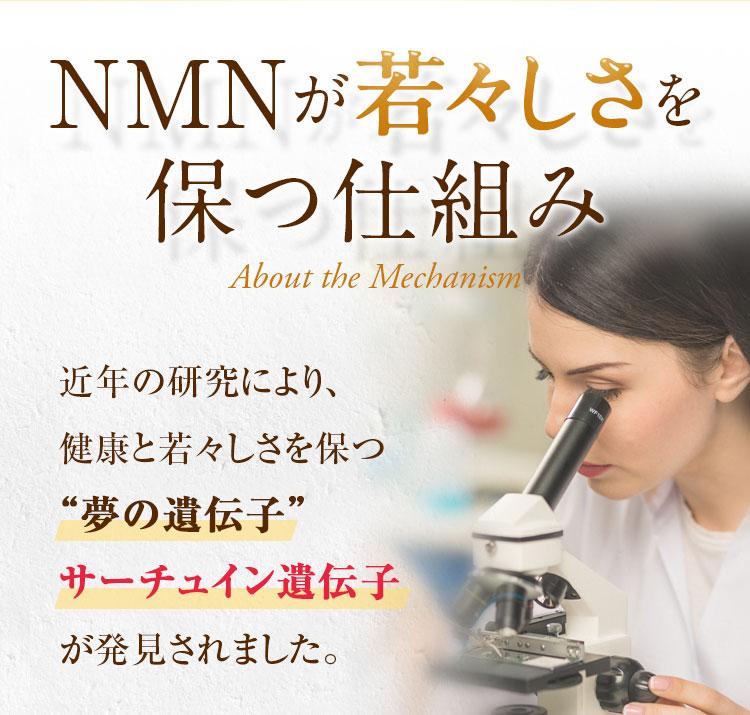 NMNが若々しさを保つ仕組み
