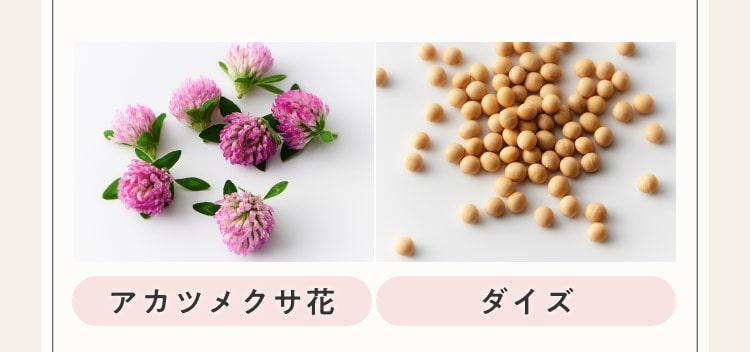アカツメクサ花、ダイズ