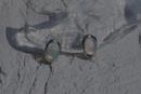 モンドオーバル ピアス E-50