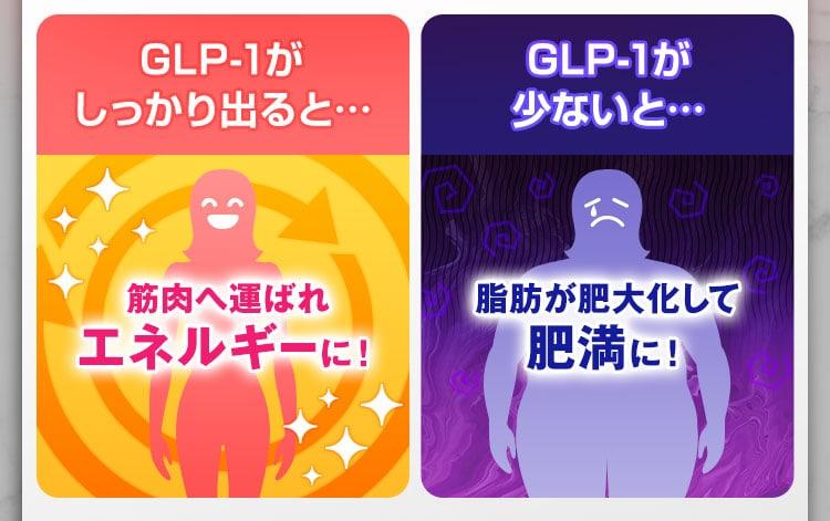 GLP-1が多い体ほど痩せやすく、少ない体は痩せにくくなります。