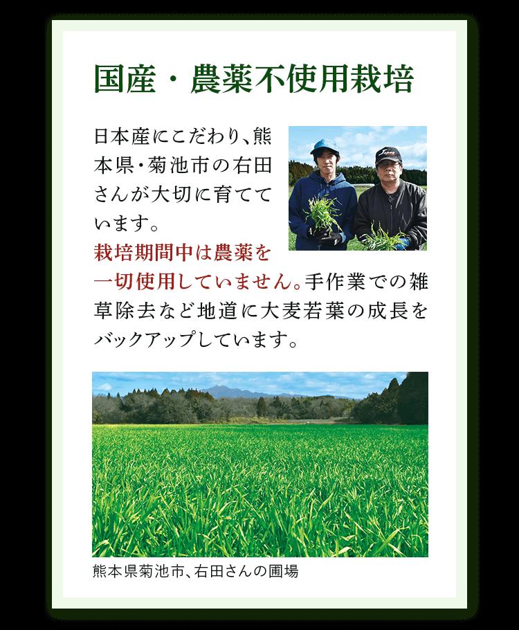 point 3 大麦若葉のこだわり 国産・農薬不使用栽培。日本産にこだわり、熊本県・菊池市の右田さんが大切に育てています。栽培期間中は農薬を一切使用していません。手作業での雑草除去など地道に大麦若葉の成長をバックアップしています。