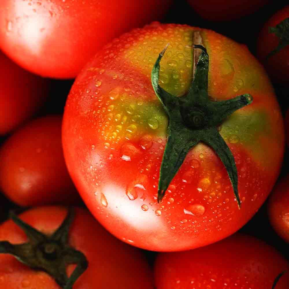 藤井さんのトマト