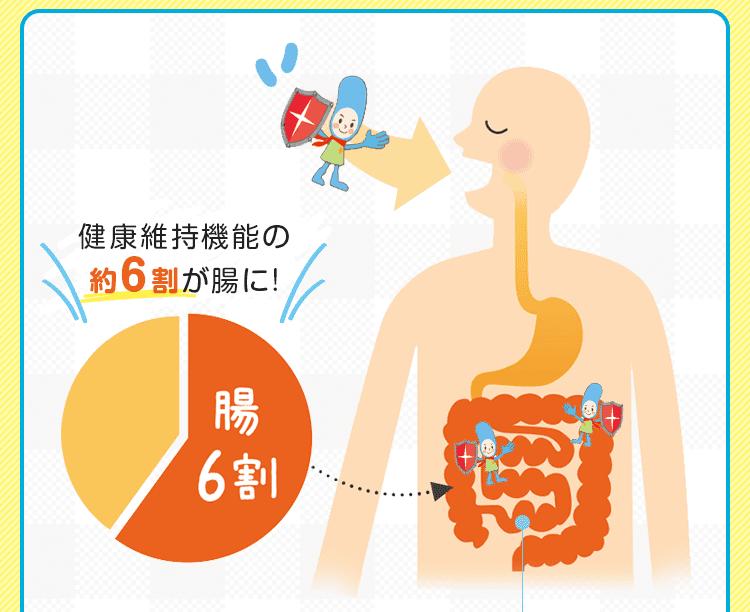 健康維持機能の約6割が腸に!