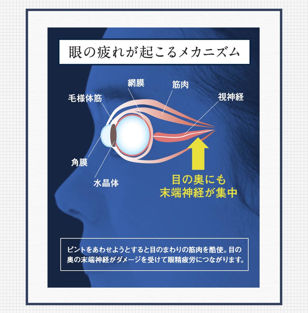 眼の疲れが起こるメカニズム ピントをあわせようとすると目のまわりの筋肉を酷使。目の奥の末端神経がダメージを受けて眼精疲労につながります。