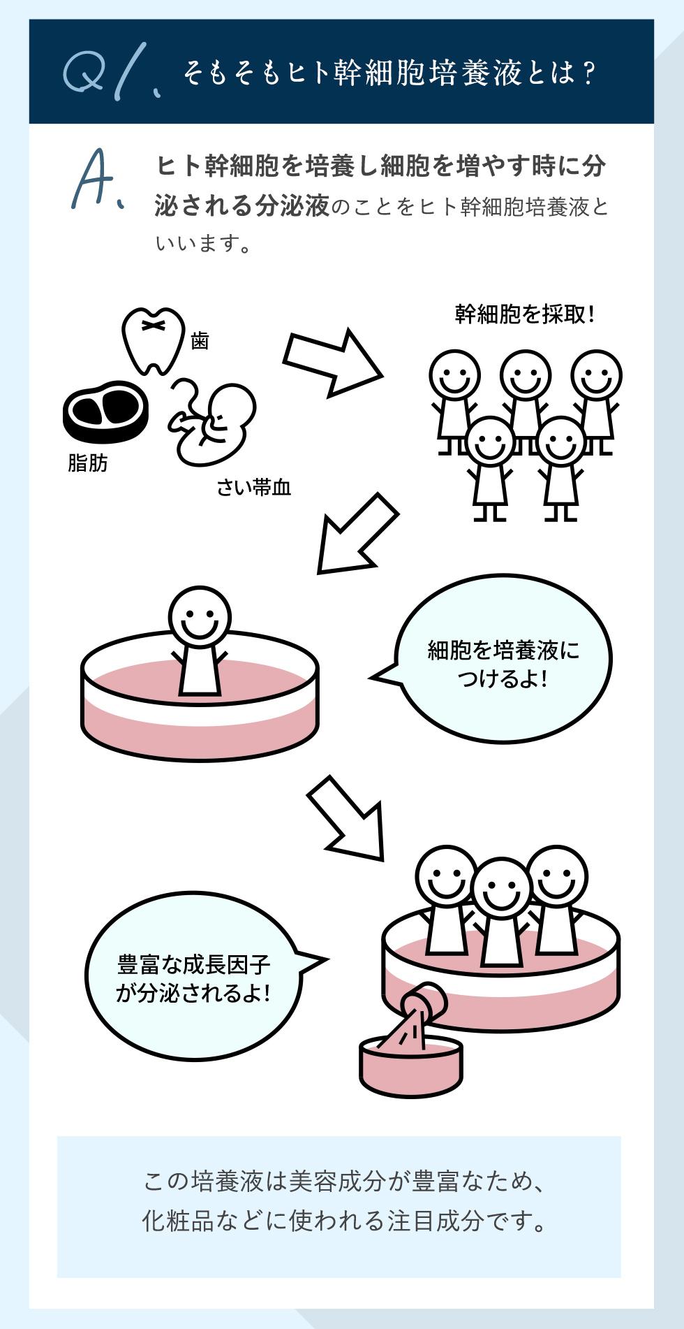 Q1.そもそもヒト幹細胞培養液とは?ヒト幹細胞を培養し細胞を増やす時に分泌される分泌液のことをヒト幹細胞培養液といいます。