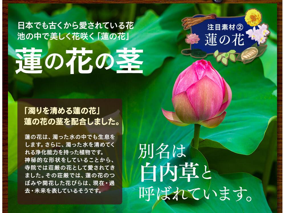 注目素材②、日本でも古くから愛されている花、池の中でも美しく花咲く「蓮の花」。