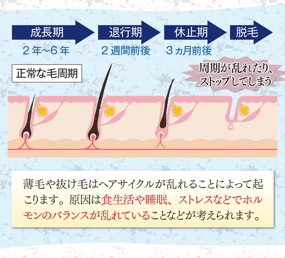 薄毛や抜け毛はヘアサイクルが乱れることによって起こります。原因は食生活や睡眠、ストレスなどでホルモンのバランスが乱れていることなどが考えられます。