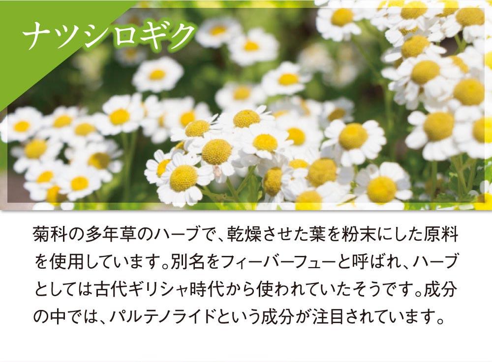 ナツシロギク:菊科の多年草のハーブで、乾燥させた葉を粉末にした原料を使用しています