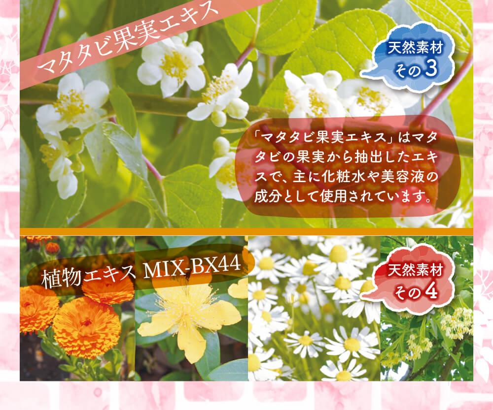 大満足の美容成分③マタタビ果実エキス④植物エキス