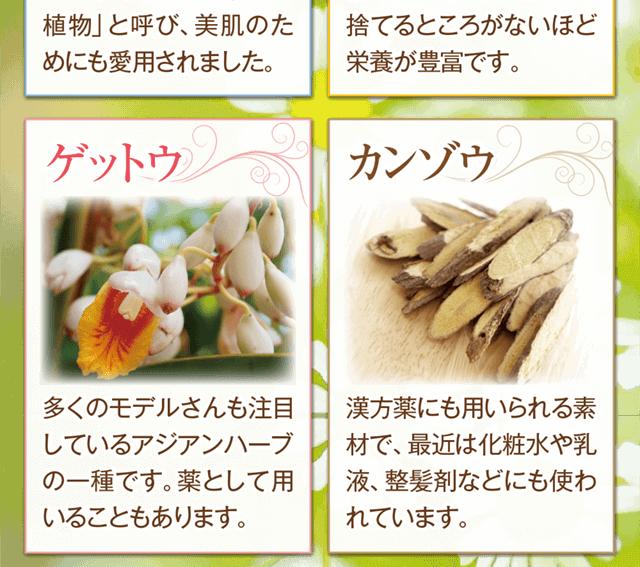 アジアンハーブの一種ゲットウ・漢方薬にも使われているカンゾウ